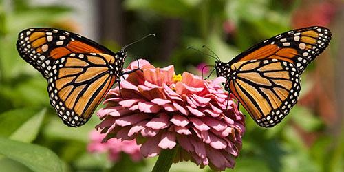 к чему снятся красивые бабочки