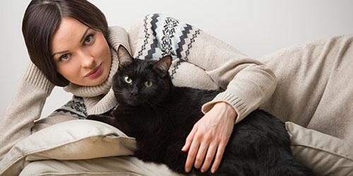 видеть во сне черную кошку