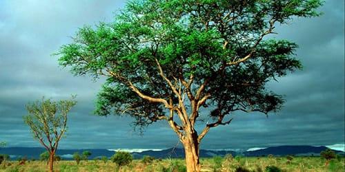 к чему снится дерево