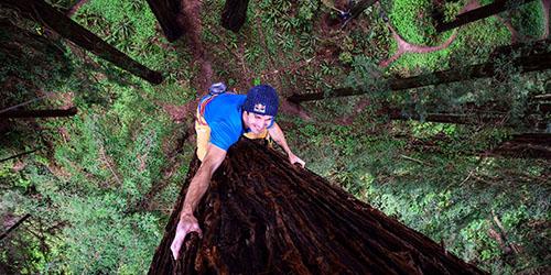 Залезать на дерево