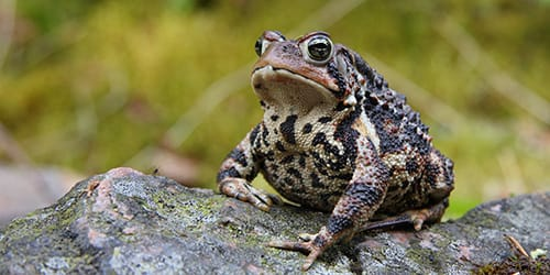 К чему снится убить жабу фото