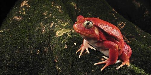Сонник жаба к чему снится жаба во сне