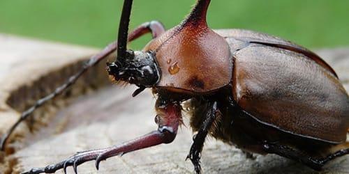 Фото Сонник жуки насекомые давить