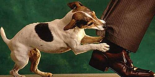 Фото Сонник укусила собака за ногу без крови