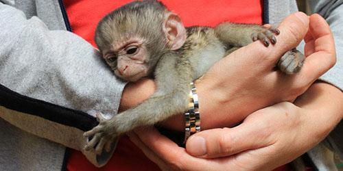 Увидеть во сне обезьяну