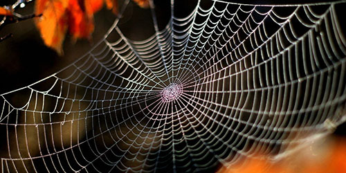 Увидеть во сне паутину