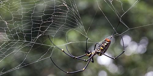 К чему снится паук в паутине