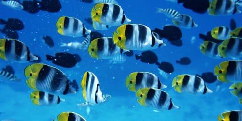 Сонник рыба в воде к чему снится рыба в воде во сне