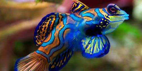 к чему снится рыба в воде