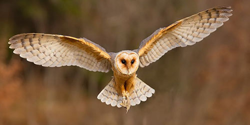 приснилась летящая сова