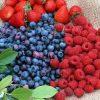 сонник ягоды