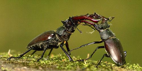видеть жуков во сне