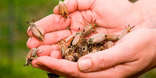 приснилось много жуков