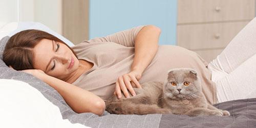 приснилась беременная девушка с кошкой