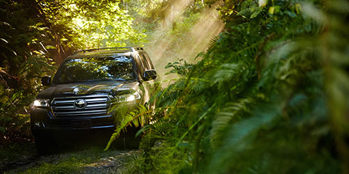 машина в лесу