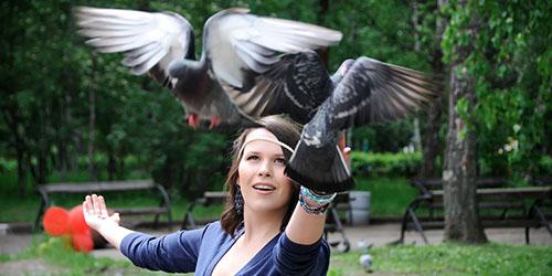 ручные голуби