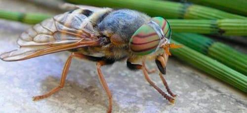 к чему снятся насекомые