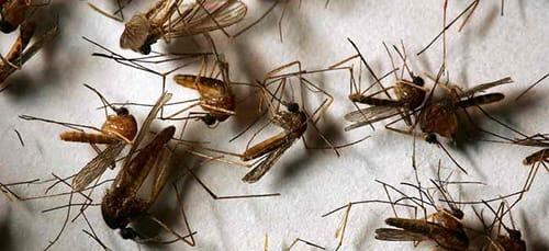 насекомые во сне