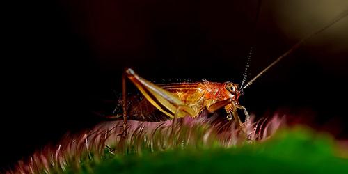 видеть во сне насекомых