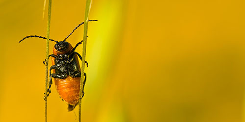 к чему снятся насекомые женщине