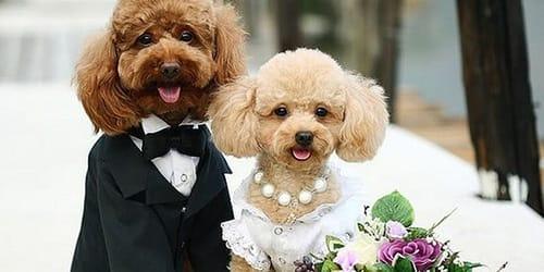 сонник чужая свадьба