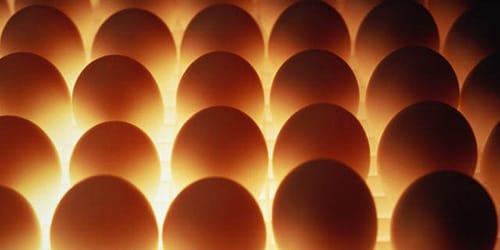 к чему снятся куриные яйца