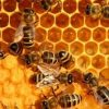 к чему снятся пчелы во сне
