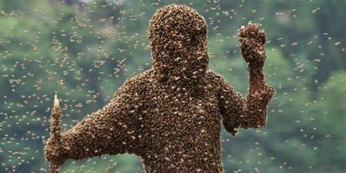 сонник пчелы кусают