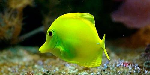 рыба снится к беременности