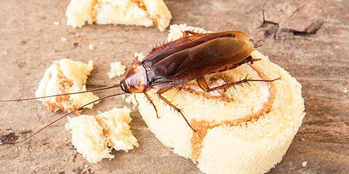 увидеть во сне таракана