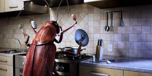 Сонник толкование снов к чему снится тараканы
