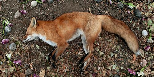 к чему снятся трупы животных