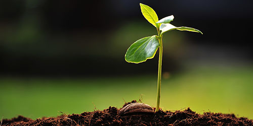 приснился росток в земле