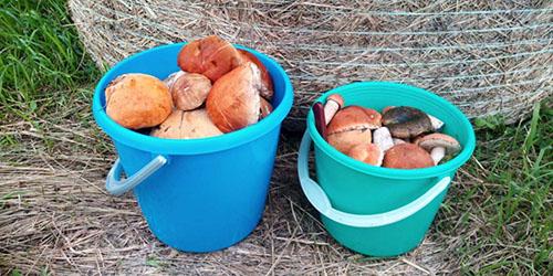 приснилось много грибов