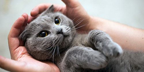 к чему снится ласковый кот
