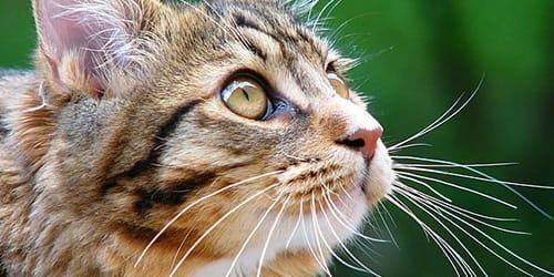 Приснился кот красивый