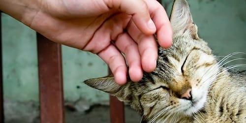 гладить кота во сне