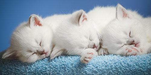 увидеть во сне котят