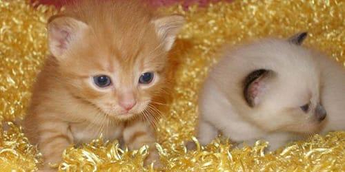 сонник котята