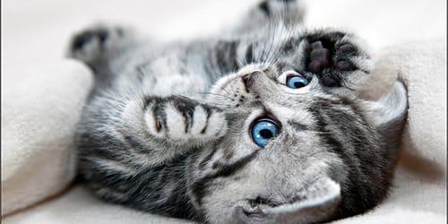 котята во сне