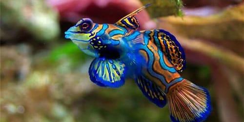 Сонник рыба к чему снится рыба во сне