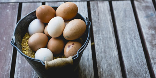 ведро яиц