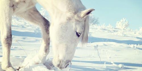 сонник белая лошадь