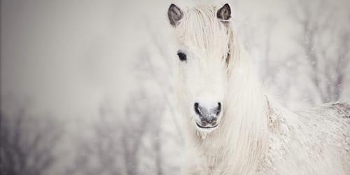 к чему снится белая лошадь во сне