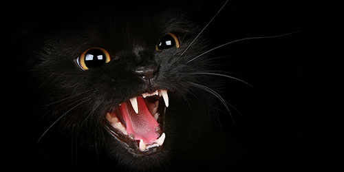 Черный кот нападает во сне