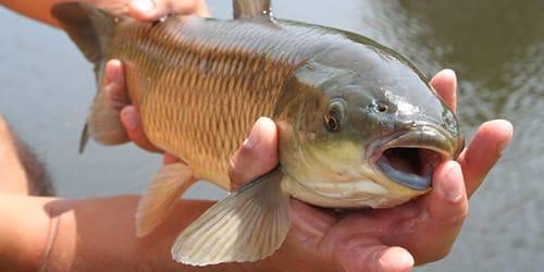 к чему снится живая рыба во сне