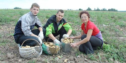 к чему снится копать картошку во сне