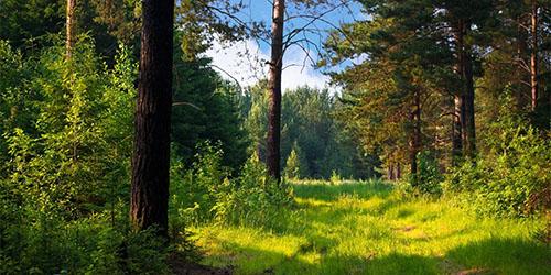 Увидеть во сне лес