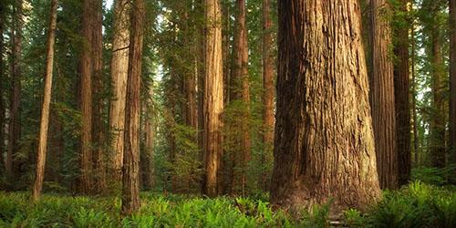 К чему снится дремучий лес