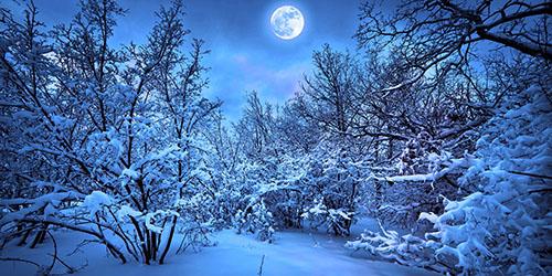 Зимний лес во сне